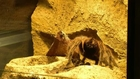 Chilean farm bets on tarantulas as pets