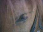 Mon tit Fan [poney]